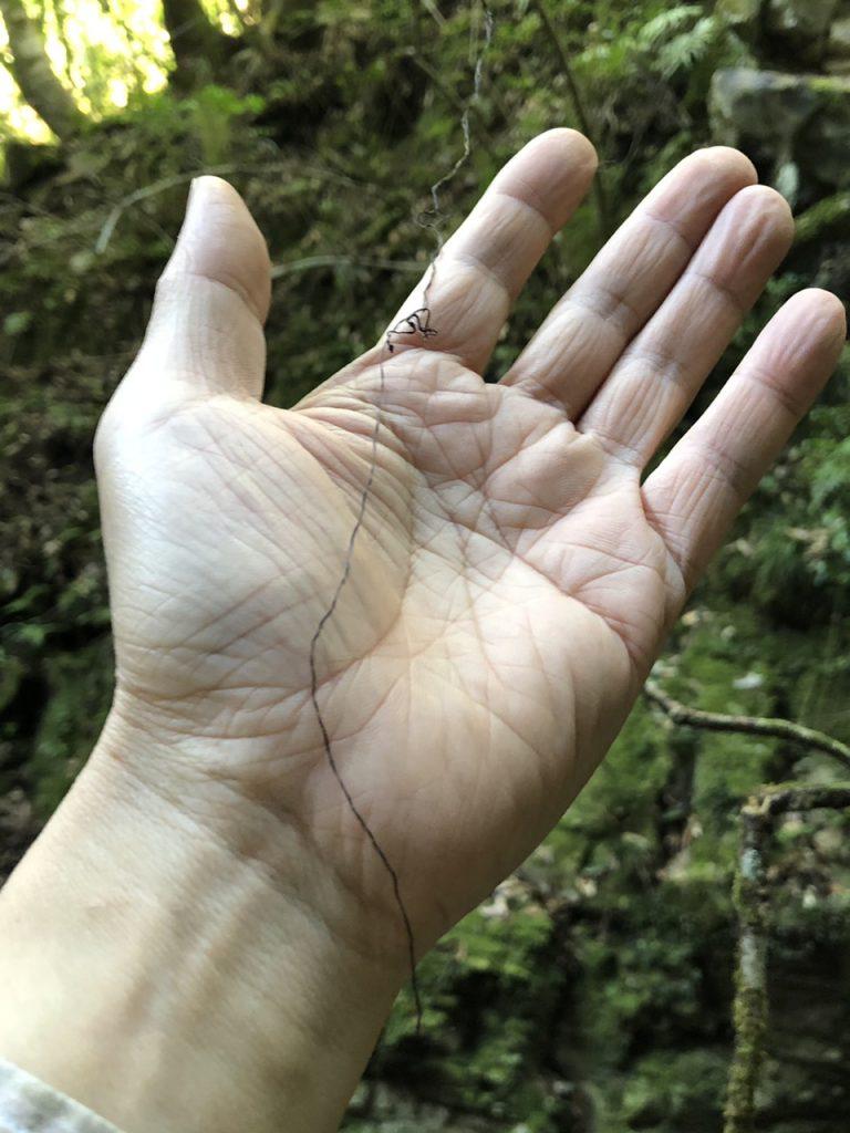 山姥の髪の毛